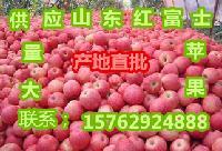 山东苹果产区,优质红富士苹果*批发