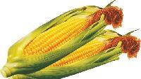 玉米黄色素批发厂家