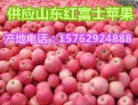 山东苹果批发行情