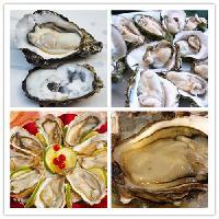 牡蛎提取物   牡蛎肉提取物
