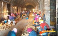 北京顺禾源种业培育一级土豆种子
