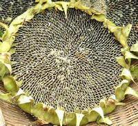 高油酸葵花籽油