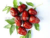 新疆红枣价格