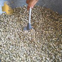 印度尼西亚原产圈养猫屎咖啡生豆