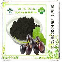 厂家黑加仑提取物原花青素25% 黑醋栗