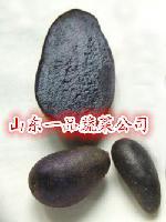黑土豆种薯黑金刚