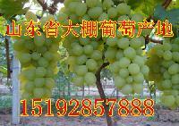 维多利亚葡萄产地价格