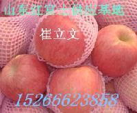 山东优质生鲜苹果价格红富士产地价格