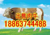 肉牛养殖利润分析2017