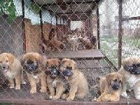 现在小狗苗价格哪里有卖肉狗的养殖场