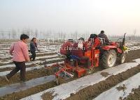 马铃薯种子土豆培土的作用