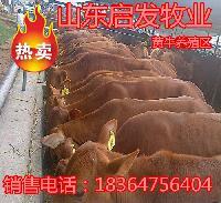 东北黄牛交易市场