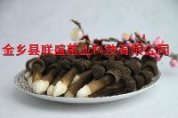 黑皮鸡枞菌出菇菌棒