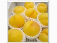 优质黄桃价格 砀山83黄桃多少钱斤 砀山黄桃供应