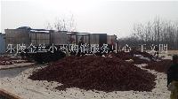 专业原料金丝小枣供应商