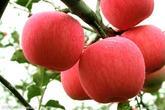 厂家直销浓缩苹果汁 饮料厂专用原料 现货供应