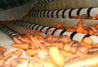 胡萝卜浓缩浆生产线