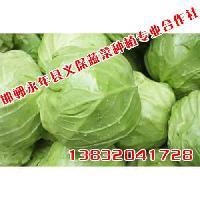 邯郸绿色蔬菜定制义保蔬菜专业绿色蔬菜定制