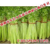 河北绿色蔬菜义保蔬菜绿色蔬菜厂家