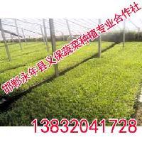 绿色蔬菜定制义保蔬菜绿色蔬菜基地