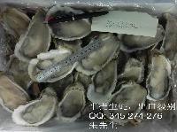 单冻半壳生蚝 (出口级别)