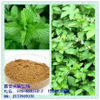 薄荷提取物 10:1 留兰香提取物 绿薄荷提取物