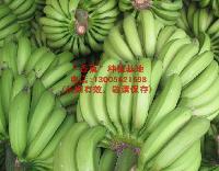广东优质香蕉种植基地,全国批发配送香蕉