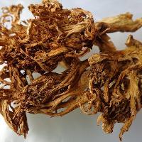 野生珊瑚菌扫把扫帚菌批发供应