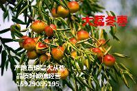 大荔冬枣价格