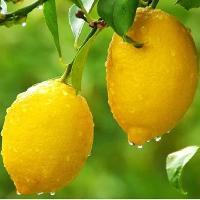 1-2级柠檬鲜果.