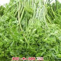 辣木叶蔬菜辣木嫩茎