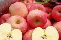 山东红富士苹果最新价格
