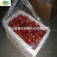 晟春元专用樱桃活性气调保鲜袋