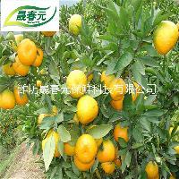 晟春元柑橘专用物理活性气调保鲜袋