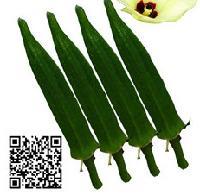 卡里巴优质黄秋葵种子