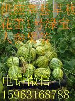 莘县头茬花蕾1号甜瓜