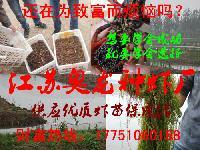 龙虾苗价格趋势