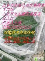 供应山东精品油亮密刺黄瓜