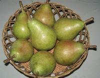 红香酥梨产地价格库尔勒香梨种植产地红香酥梨基地