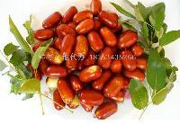 鲜长红枣产地价格低