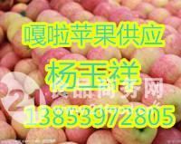 苹果-嘎啦苹果价格