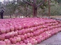 红 富士苹果批发价格