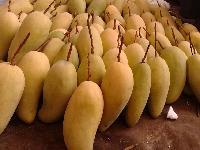 最新攀枝花芒果价格/凯特芒果包邮