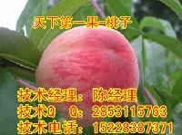 怎么种植优质桃子苗,桃子苗生产厂家
