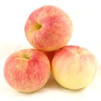 山东潍坊嘎啦苹果