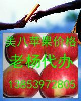 美八苹果价格山东苹果批发价格美八苹果产地价格