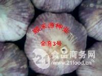 秋季大蒜种子