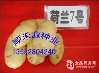 内蒙土豆种子