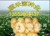 新春特惠土豆种子