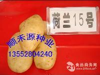 土豆种子荷兰15